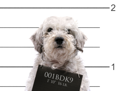 baddog.jpg