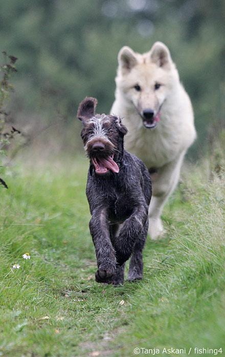 dogandwolf.jpg