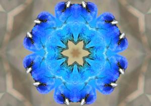 buntingkaleidoscope