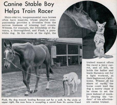 caninestableboy