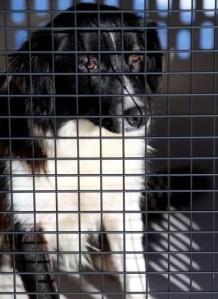 confiscateddog