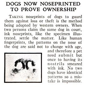 dognoseprint