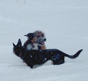 snowplay12_08