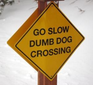dumb-dog-crossing