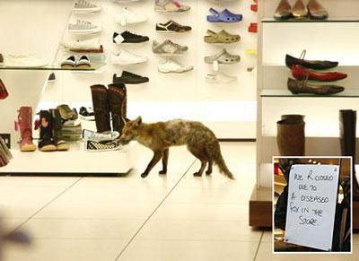 ShoeFox
