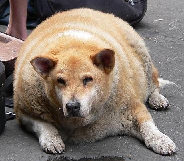 obesedog