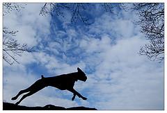 flyingboxer