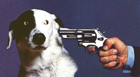 kill-this-dog.jpg